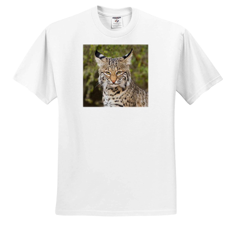 Lynx Rufus Portrait Bobcat ts/_315032 3dRose Danita Delimont - Adult T-Shirt XL Mammal