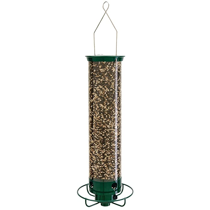 The Best Bird Food For Outdoors Squirrel Proof
