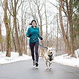 Kurgo 6 In 1 Hands Free Dog Leash | Reflective