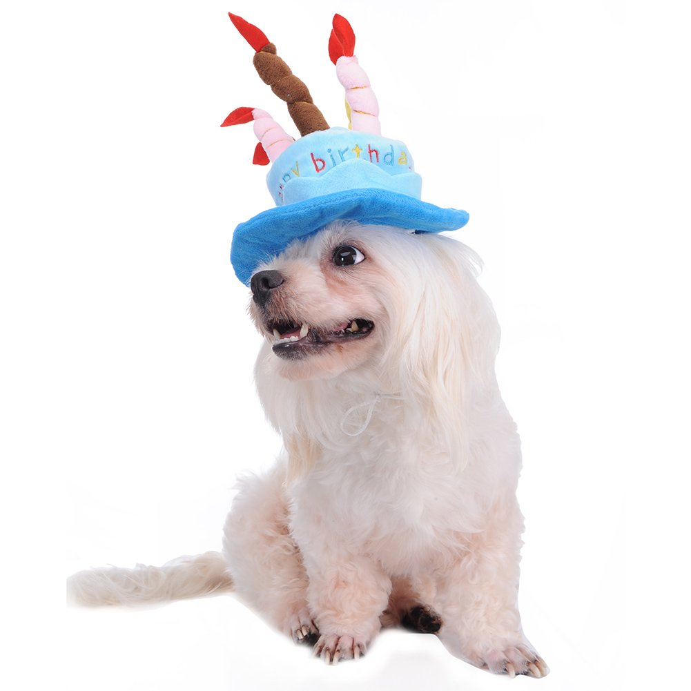 Amazon Jannyshop Pet Birthday Hat For Dogs Cats Lovely Happy Headwear With Cake And Candles Design Time Blue Supplies
