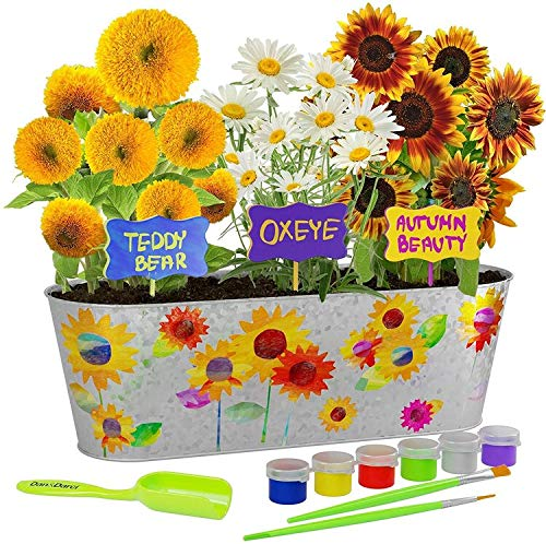 Paint & Plant Sunflower Growing Kit – Grow Autumn Beauty, Teddy Bear, Oxeye Sun Flowers : Includes Everything Needed to…
