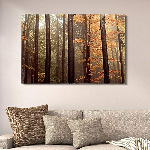 Forest with Tall Trees and Yellow Leaves Gallery