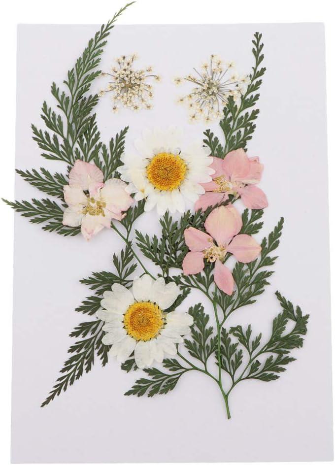 IPOTCH 11 B 25pcs Gepresste Bl/ätter Getrocknete Gepresste Blumen Ahornblatt DIY Gepr/ägte Fotorahmen