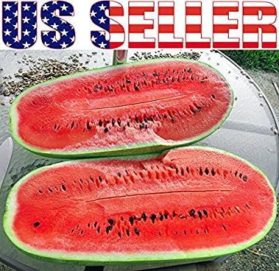 15+ ORGANICALLY GROWN GIANT Congo 35 LB Watermelon Seeds, Heirloom NON-GMO, Sugar Sweet, Fragrant, Productive, From USA