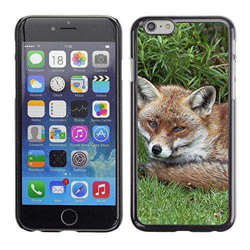 "Premio Sottile Slim Cassa Custodia Case Cover Shell // F00010971 Renard // Apple iPhone 6 6S 6G PLUS 5.5"""