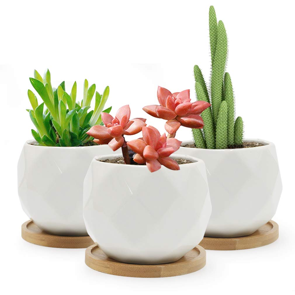 SQOWL 3 Piece 3.2 inch White Ceramic Succulent Planter Pot Modern Cute Small Cactus Herb Flower Planters Set with Bamboo Tray Indoor or Outdoor