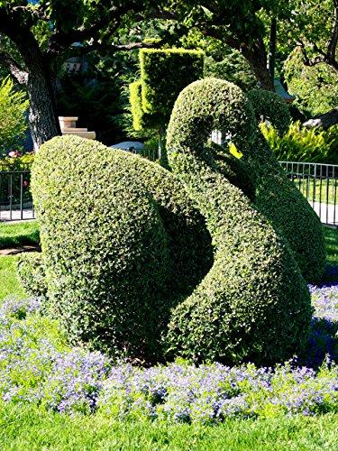 LAMINATED POSTER Swan Topiary Sculpture Nature Poster Print 24x 36 (Swan Topiary)
