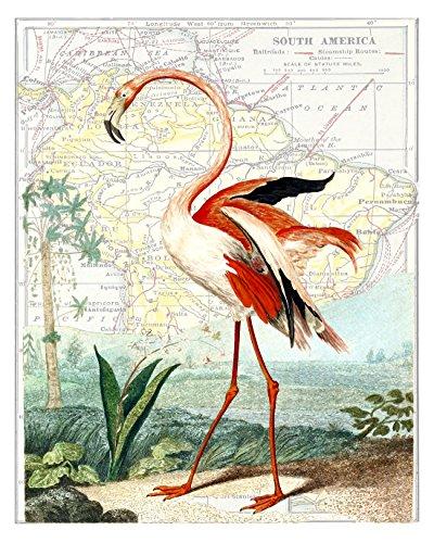 11x14 Pink Flamingo Fine Art Print, #1 (Original 1800's Illustration), Victorian Era Fine Art Print - Overlaid on an 1800's Reproduction Map of South America (Flamingo Santa)