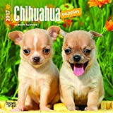 Chihuahua Puppies 2017 Mini 7x7 (Multilingual Edition)