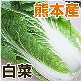 あいあい 熊本県産 白菜 1本 【野菜セット同梱で】【九州 野菜】