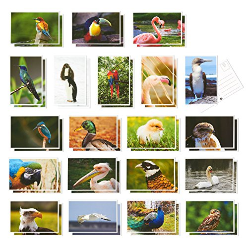Set of 40 Bird Postcards Variety Pack - Including Flamingo; Toucans; Peacock; Swan - Self Mailer Mailing Side Postcards 20 Different Image Designs 40 Pack Postage Saver - 4 x 6 Inches