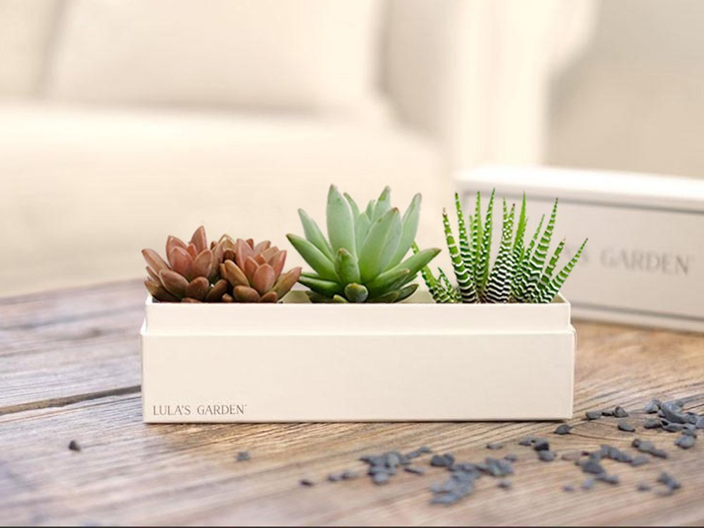 Live Succulent Plant - Garden Centerpiece with I Love You Gift Box - Perfect and Unique Gift for Wife, Mom, Friend, Co-Workers, Boss or Teacher (Jewel Garden, I Love You) by Lula's Garden (Image #3)