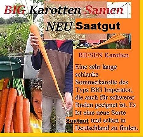 25x Big Karotten Big Imperator Samen Selten Gemüse essbar Neu #72