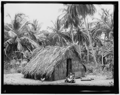 - HistoricalFindings Photo: Typical Puerto Rican hut,Taino Indians,structures,dwellings,San Juan,Rico,c1903