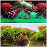 """Product review for NEW!! 19 Inch Height Double Sided Aquarium Background Red Underwater Plants And White Sand Decorations (60""""(L) x 19""""(H))"""