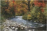 Forest Creek Poster 36 x 24in