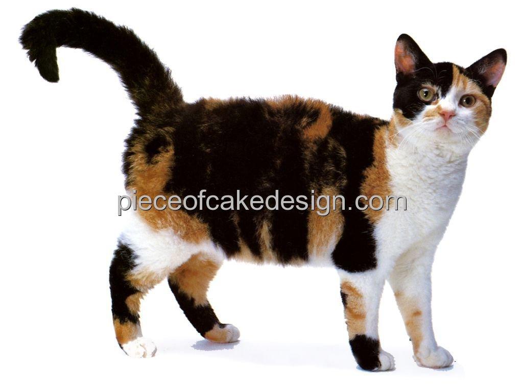 1/4 Sheet ~ Cat Breeds American Wirehair Birthday ~ Edible Cake ...