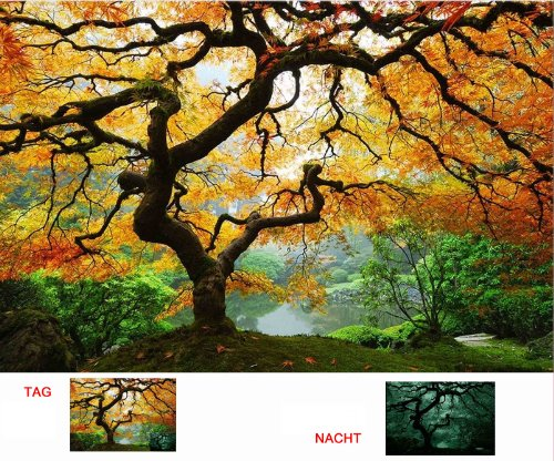 Startonight Wall Art Canvas Maple Tree, Nature USA Design for Home Decor, Dual View Surprise Artwork Modern Framed Ready to Hang Wall Art 23.62 X 35.43 Inch 100% Original Art Painting by Startonight