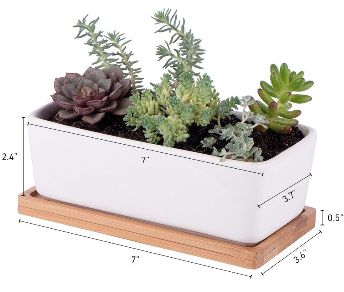Amazon.com: StarPack Premium Small White Ceramic Succulent Planter ...