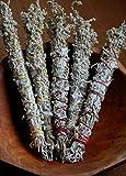 Prairie Sage Seeds (1600 seeds) incense campfire patchouli herb