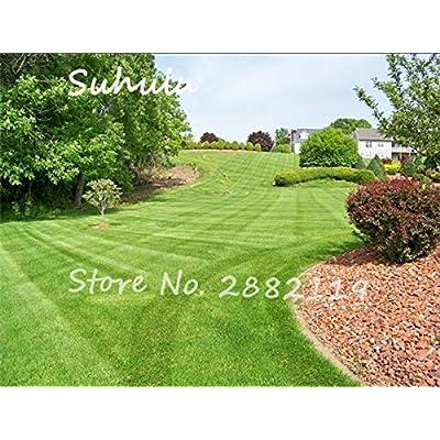 Rare Green Grass Seed 100pcs Rare Lawn Seed Semenatsvety Perennial Garden Outdoor Ornamentals Grass Golf Soccer Fields, Villa : Garden & Outdoor