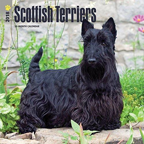 Scottish Terriers 2018 Wall Calendar