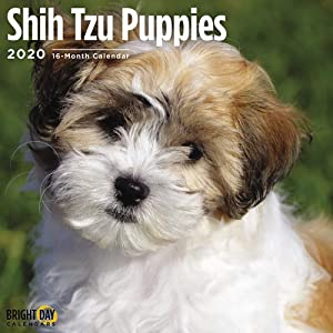 2020 Shih Tzu Puppies Wall Calendar by Bright Day, 16 Month 12 x 12 Inch, Cute Dogs Puppy Animals Chrysanthemum Canine