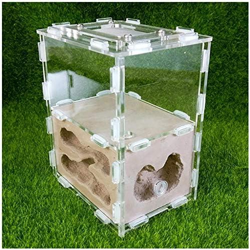 Ameisennest Dick Villen Werkstatt Acryl Gips Ameisen Bauernhof Insektenkäfig Studenten Wissenschaftlich Gerät Spielzeug Einfach Zu Installieren Zum Die Meisten Ameisen (Color : Brown)