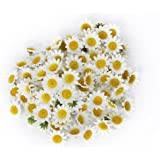 Flowers Heads Aftermarket 100x Artificial Gerbera Daisy Flowers Heads for DIY Wedding Party (White)