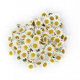 Akord circa 100pcs artificiale gerbera teste di fiore per matrimonio fai da te, plastica, White, 3.9 x 3.9 x 2 cm