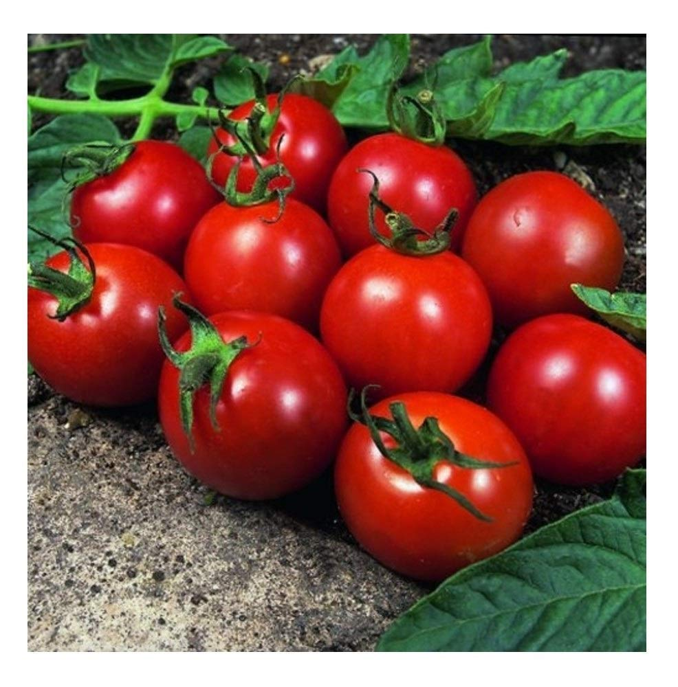 seedsown Tomate - Alicante - 170 Semillas Finest: Amazon.es: Jardín