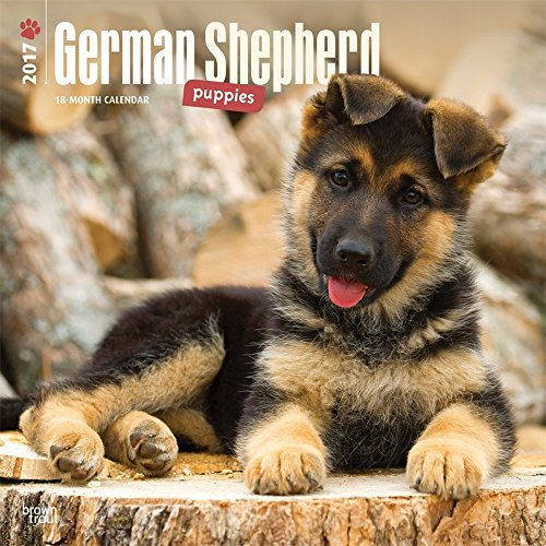 2017 Monthly Wall Calendar - German Shepherd Puppies