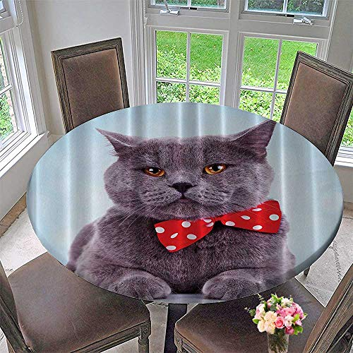 Mikihome Round Premium Table Cloth Tuxedo Gray Scottish Fold Theme with Red White ka Dots Tie Bow Baby Blue Fun Home 63