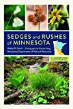 : Sedges and Rushes of Minnesota: The Complete Guide to Species Identification