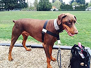 Walk Your Dog With Love Arnés para Detener Tirar, Delantero en ...