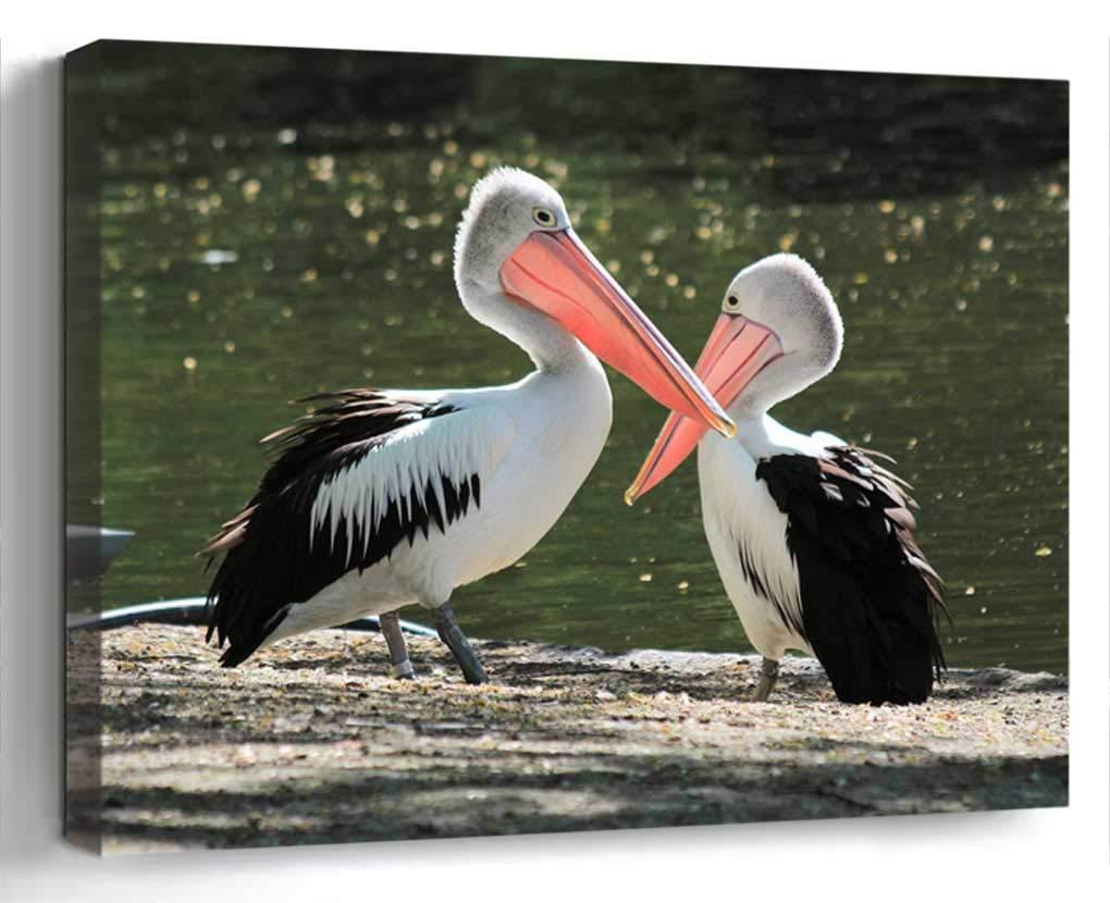 Wall Art Canvas Print Home Decor (20x14 inches)- Pelikan Bird Water Bird Waterfowl Birds Clea