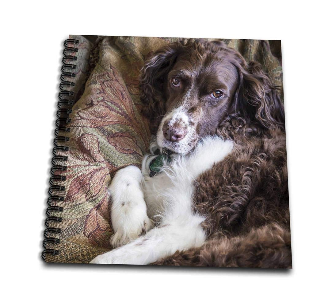 3dpink db_208612_2 USA, Washington English Springer Spaniel on Couch Memory Book, 12 by 12