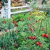 Fruit Combo Pack Raspberry, Blackberry, Blueberry, Strawberry, Apple (Organic) 525+ Seeds 647923989472 Self Fertile + 5 Free Plant Marker - Stocking Stuffers