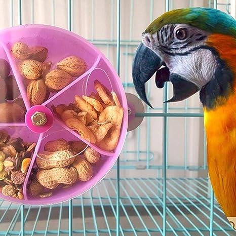 Greenlans - Cuenco para Comer pájaros y pájaros para Loro, Macaw Africano, Gris Budista