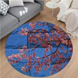 Nalahome Modern Flannel Microfiber Non-Slip Machine Washable Round Area Rug-Rustic Thai Sakura Blossom Mural Branch with Flowers Spring Floral Beauty Print Pink Blue area rugs Home Decor-Round 71''