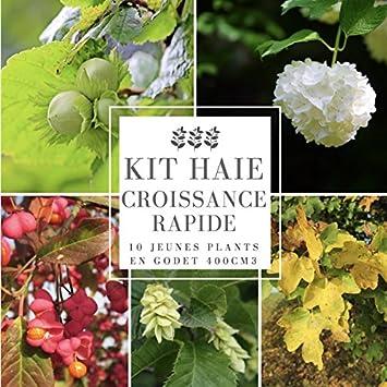 Kit Haie Collection Croissance Rapide - 10 Jeunes Plants ...