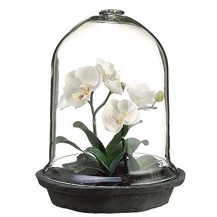 12 Phalaenopsis Orchid Plant In Glass Terrarium White Amazon Co Uk