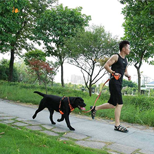 Bocho Technology Hands free Pet leashs,Jogging Belt & Glove Nylon Stretch-Durable Dog Chains Medium Size (Orange) by Bocho Technology