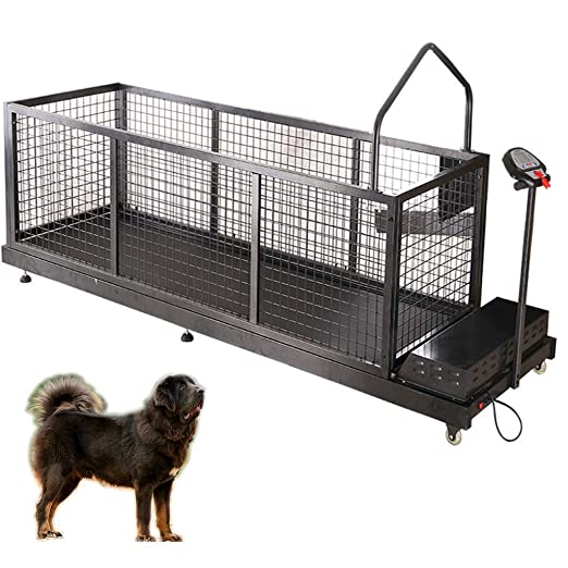 QNMM Cinta para Correr para Perros, Cinta para Correr Fitness Pet ...