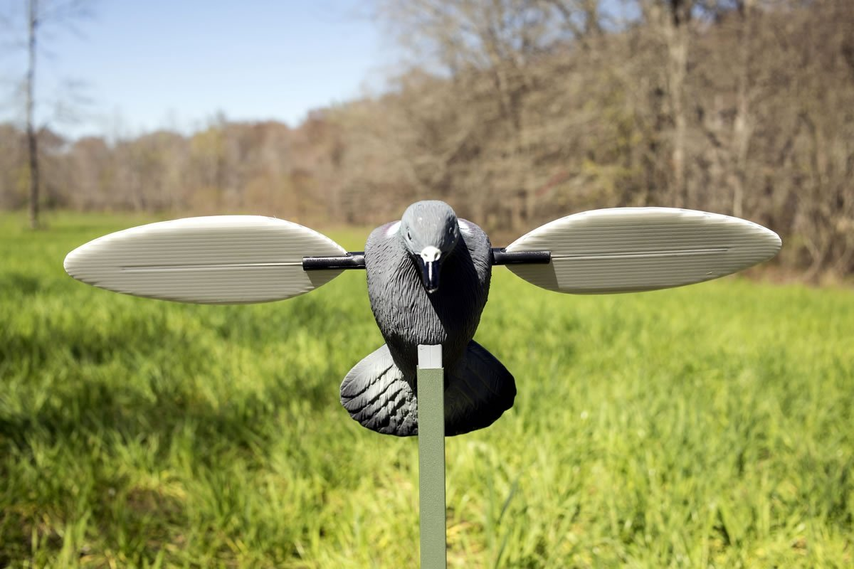 MOJO Outdoors Pigeon Decoy by MOJO Outdoors (Image #3)