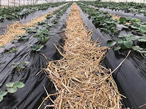 Agfabric 0.6mil Landscape Garden Film Embossed Plastic Mulch Strawberry Tomato Potato Weed Barrier Polyethylene Sheeting, 3.3x75ft, Black by Agfabric