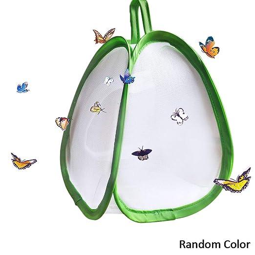cuckoo-X - Jaula para Insectos con diseño de Mariposas: Amazon.es ...