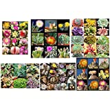 Pack of 50 Cactus Succulents Seeds, ALL Succulent Varieties Mix, Small (Comes with Free How to Live Stress Free Ebook)