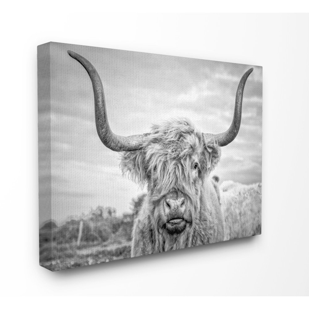 Home Black and White Highland Cow Photograph Giclee Texturized Art 16x20 Multicolor Stupell Industries aap-154_fr_16x20