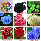 free shiping 9 Colors Beautiful Flowers*the Best Choice for Home Gardening*Rose Seeds mini garden plants